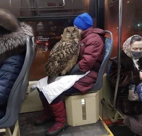 ホグワーツ行きのバスに乗る人