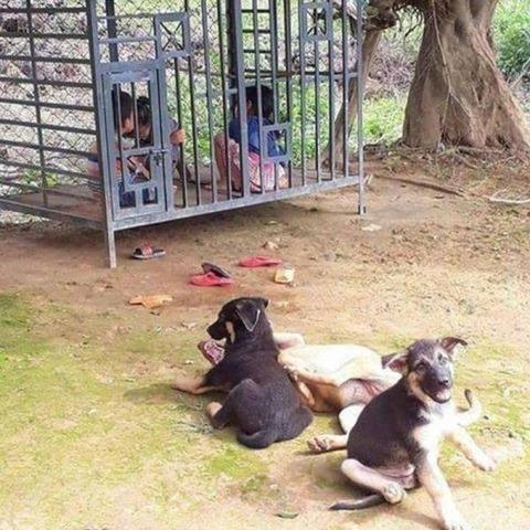 子供たちをイヌから守るための檻