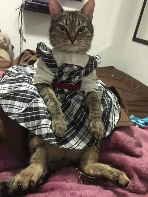 服を着たイヌとネコ (1)