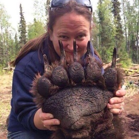 クマの手のデカさが尋常じゃない…!