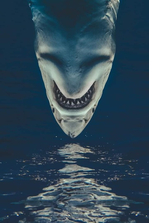 逆さのサメ