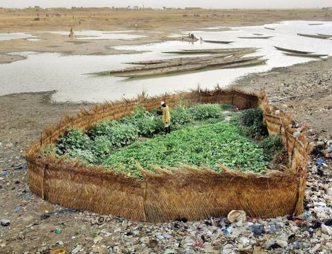 アフリカの川べりの畑