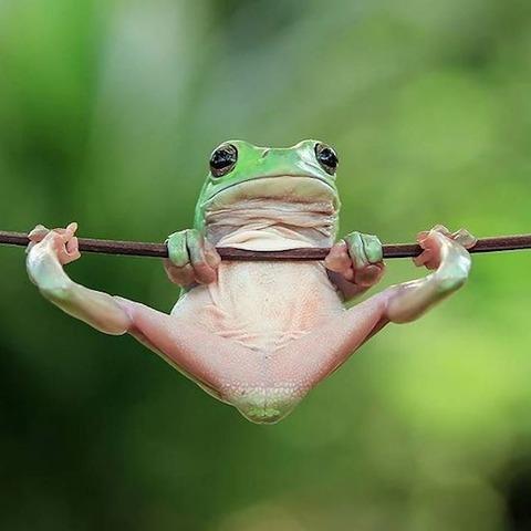 カエルの鉄棒