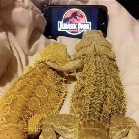 一緒に恐竜映画でも見ようぜ!