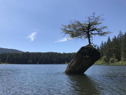 湖上の岩に木が生えた