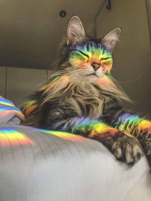 虹色のネコ