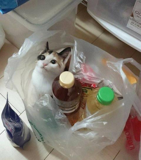 どうしても食材に成りたい猫