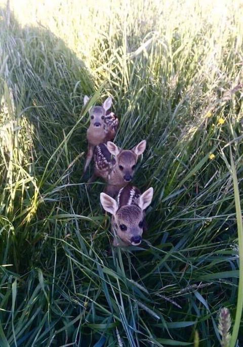 草むらに隠れていた小鹿