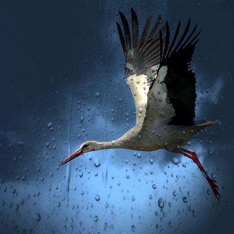 stork-782060_640