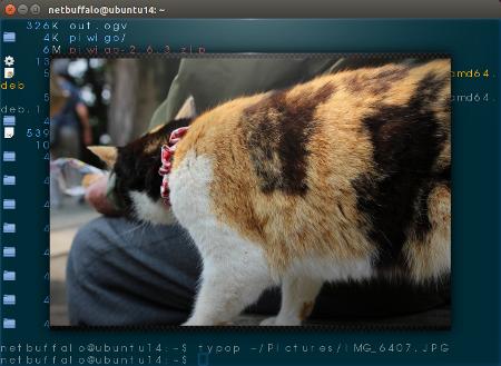 terminology linux terminal emulator
