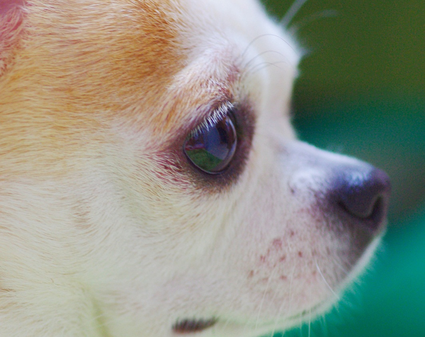 SoundLink Mini IIが出るのに初代を買った悲哀を犬で例えると