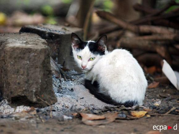 cat30