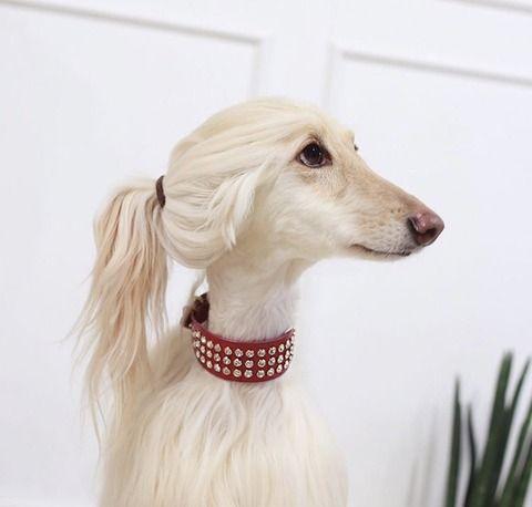 柏木由紀さんに激似の犬が見つかる