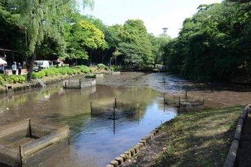 【衝撃】「池の水を全部抜く」をやった森林公園のその後wwwwww