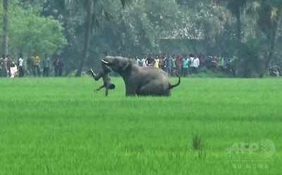 【インド】犠牲者15名「連続殺人ゾウ」を射殺へ・・・