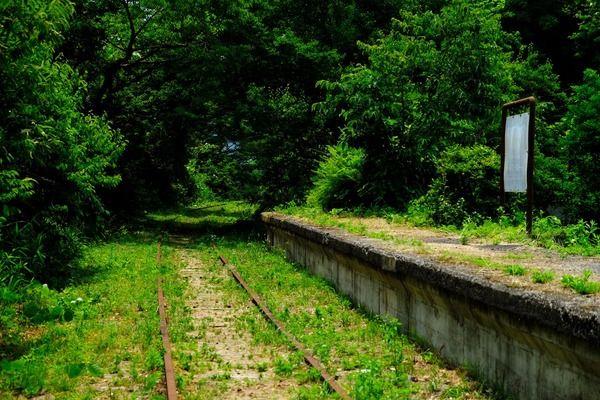【幻想的】まるで異世界に居るかのような廃線・倉吉線が美しすぎる・・・