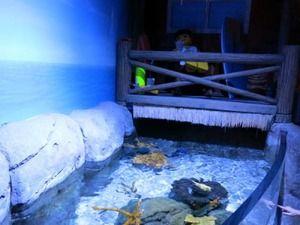 レゴランドがガチで復活、隣に「水族館」と「レゴランドホテル」を建設wwwwww