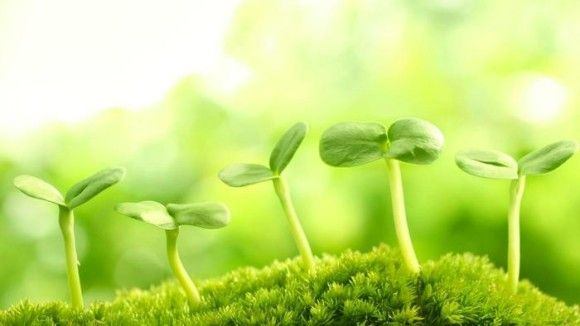 世界的偉業を成し遂げた植物で打線フラワーwwwwww