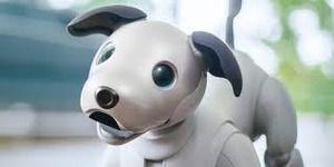 ソニーのAibo 20万円 ワイの愛犬 6万円