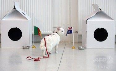 【ロシアW杯】勝敗の「予言者」、耳が聞こえない白猫「アキレス」に決定