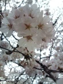 風に舞う花びらに・・・・