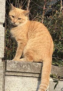 頭をよぎった猫のトリビア
