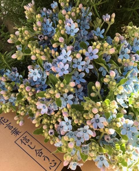 花いっぱいプロジェクト