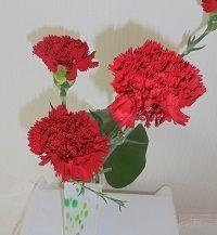 母の日、お母さんにどんなお花を選びましょうか?
