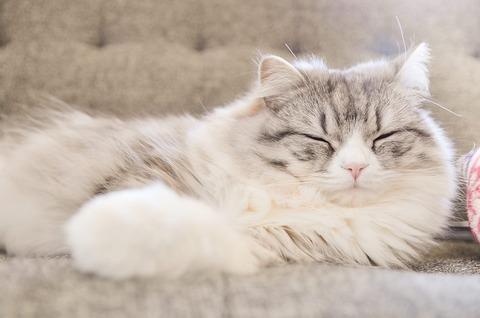 熟睡のススメ