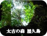 太古の森 屋久島
