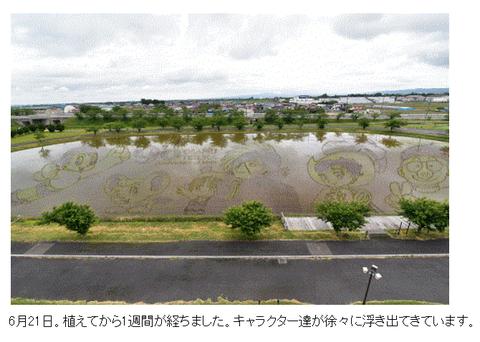 田んぼアート2-03_0621