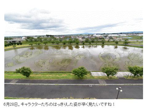 田んぼアート2-04_0628