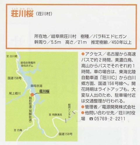 荘川桜3-2