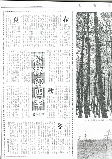 松林の四季