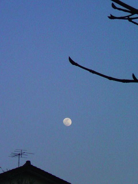 moon_yane