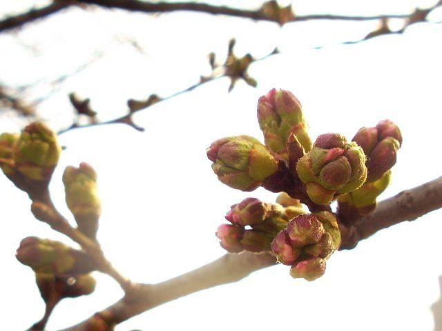 flower_saklamada.jpg