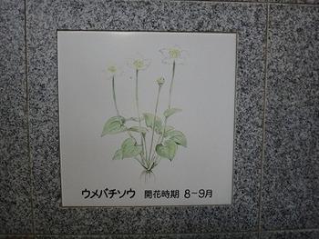 tamuraDSC08372