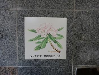 tamuraDSC08373