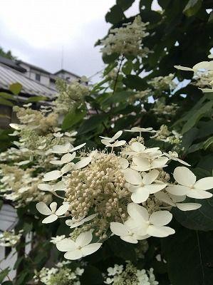 tamuraS__12451902