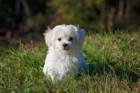 dog-1123016__340