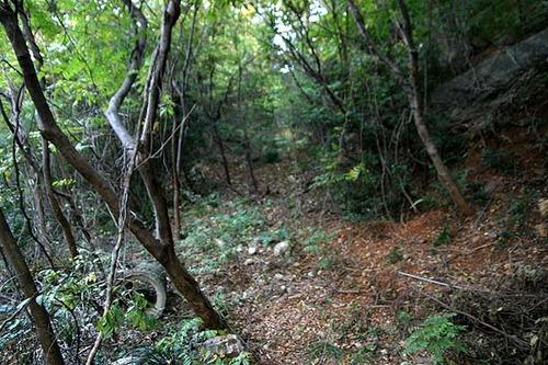 【超悲報】レoプ後、全裸で山に捨てられた女子の末路......のサムネイル画像