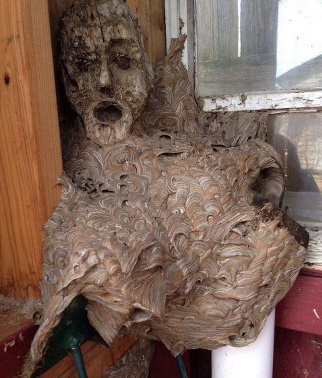 hornets-nest