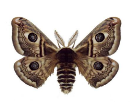 livejupiter-1458990300-32-270x220