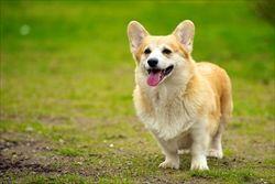 犬 土-1024x683
