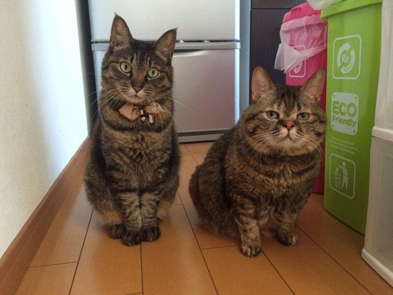 【画像】ネコの世界のお前らが発見されるwwwwwwwwwwwwwwwwwwwww