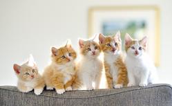 猫は自分が可愛いのを知っている?猫の魅力.1-2-650x400