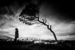 man.watching.tree_