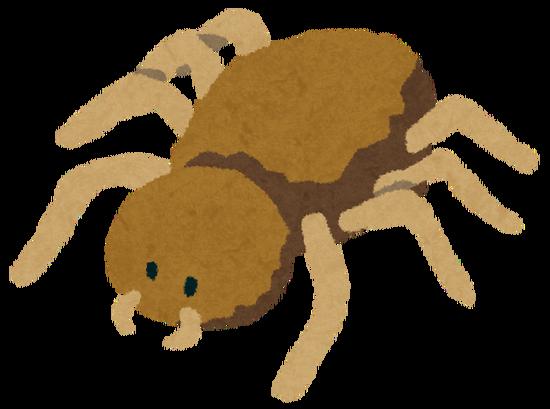【悲報】ギリシャの湖畔で数十万匹による全長1kmの巨大な蜘蛛の巣が出来てしまうwwwwww