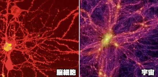 【画像】宇宙は何者か脳の中だと言うことか判明してしまうwww