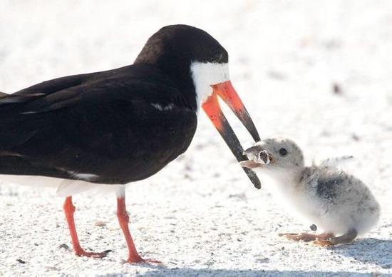 親鳥がヒナに与えていたのは、タバコの吸い殻だった。衝撃の写真が伝える現実。。。